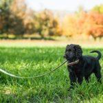 educateur canin Montreal