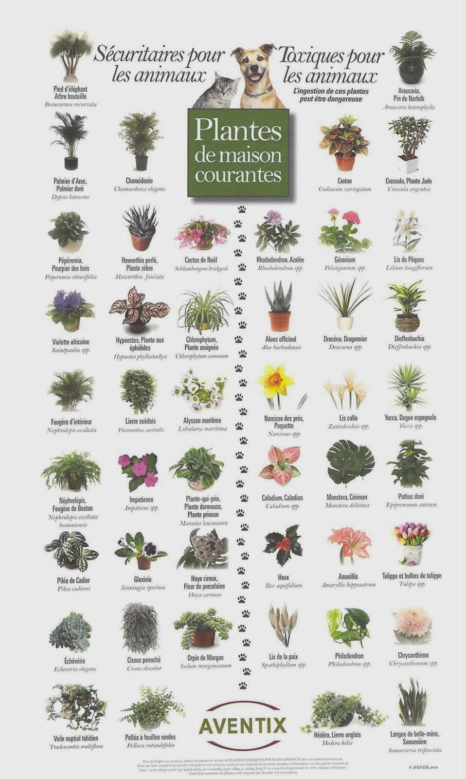 les plantes dangereuses pour le chien