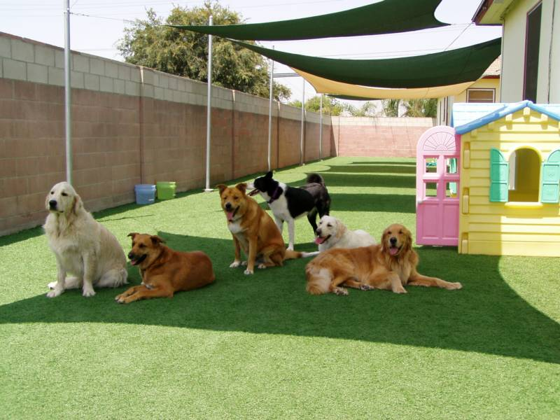Hotels With Dog Sitting Services