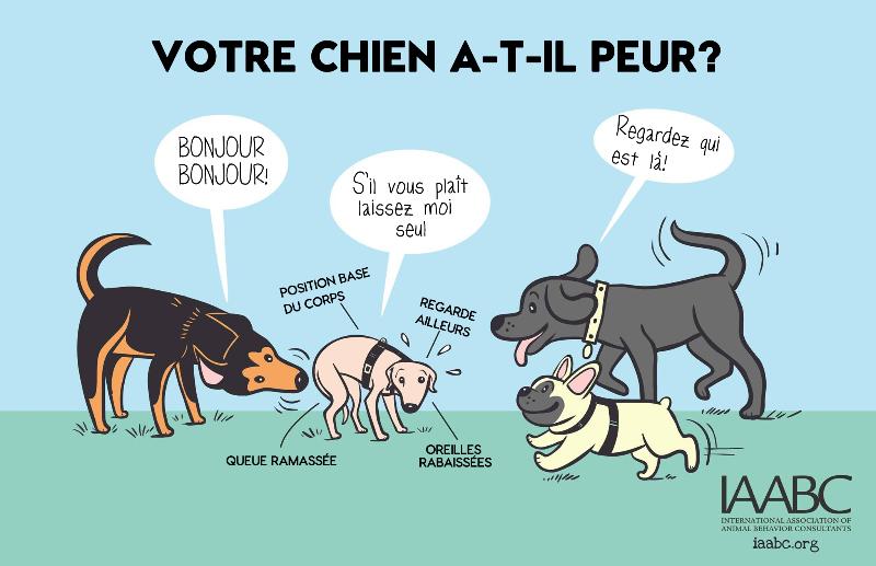 educateur_canin_vaudreuil