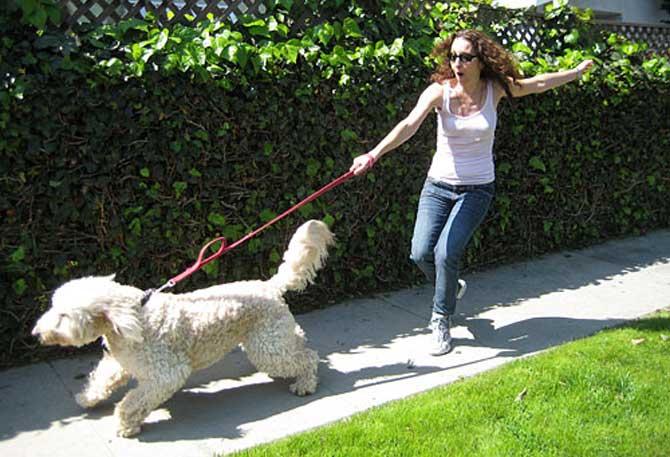 mon chien tire en laisse lors des promenades comment l 39 duquer ducation canine des quatre. Black Bedroom Furniture Sets. Home Design Ideas
