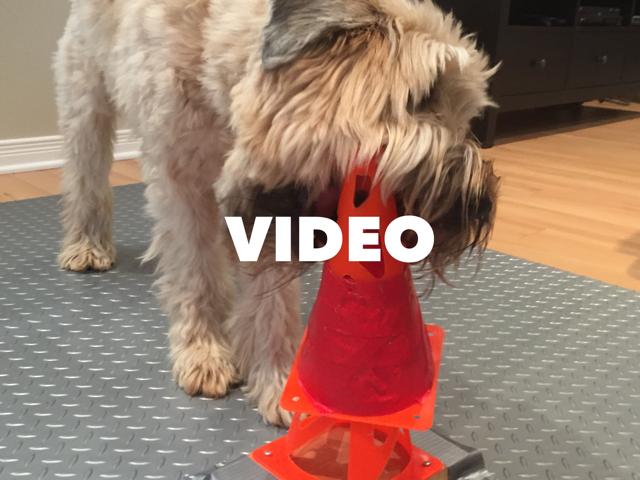 Vidéo de 7 tours et trucs pour les chiens! | Éducation